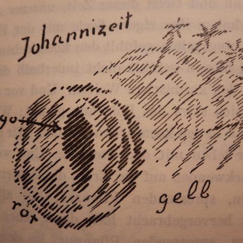 Johanni